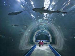 Φωτογραφία για Aqua Planet Yeosu: Ένα εντυπωσιακό ενυδρείο