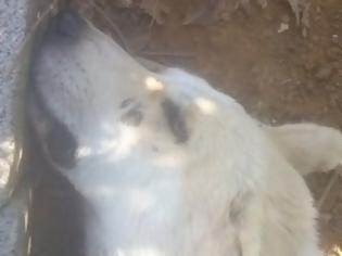 Φωτογραφία για Κτήνος σακάτεψε με σίδερα και ξύλα δύο σκυλιά - Φέρεται ως άνθρωπος της εκκλησίας!