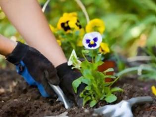 Φωτογραφία για Ιδέες για να παραμείνουν ζωντανά τα φυτά σας