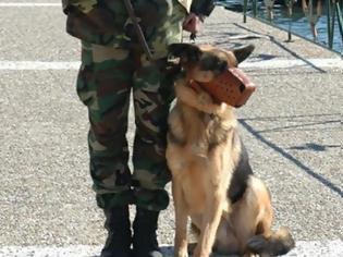 Φωτογραφία για ΣΥΣΜΕΔ- Ωράριο εργασίας συνοδών στρατιωτικά εκπαιδευμένων σκύλων
