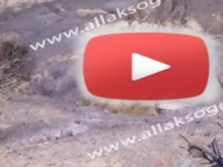 Φωτογραφία για Ο θάνατος του δάσους στη Νότιο Ρόδο από τη φωτιά [Video]