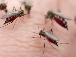 Φωτογραφία για Τον τσίμπησε κουνούπι και υπέστη εγκεφαλίτιδα
