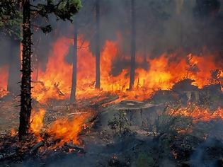 Φωτογραφία για Σε εξέλιξη πυρκαγιά στο Μαρκόπουλο