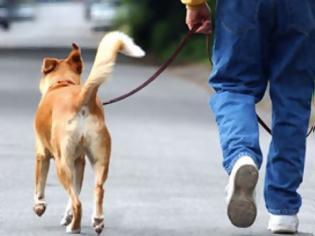 Φωτογραφία για Πάτρα: Έβγαλε βόλτα τον τυφλό σκύλο του και κατέληξε πολυτραυματίας στo νοσοκομείο γιατί έπεσε σε ... ανοιχτό φρεάτιο!