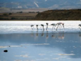 Φωτογραφία για Κύπρος: Καταγγέλλουν παράνομες εργασίες στην Αλυκή οι Οικολόγοι