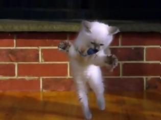 Φωτογραφία για VIDEO: Νεογέννητα γατάκια σε δράση!