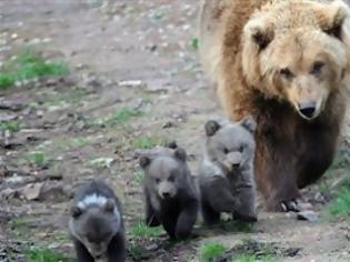 Φωτογραφία για Αρκούδα με μακάβρια γούστα στα Τρίκαλα