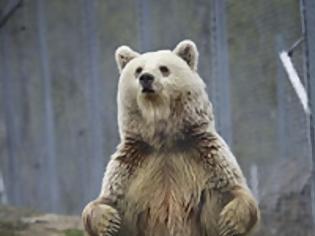 Φωτογραφία για Γιατί τα ζώα πέφτουν σε χειμερία νάρκη;