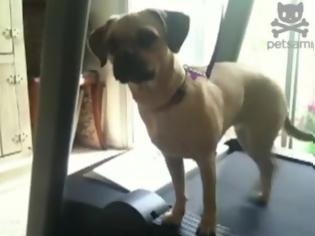 Φωτογραφία για Ο σκύλος που κάνει διάδρομο στα πλάγια! [Video]