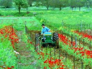 Φωτογραφία για Την Πέμπτη η επιστροφή ΕΦΚ πετρελαίου στους αγρότες