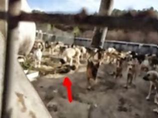 Φωτογραφία για Κολαστήριο για τα σκυλιά το Δημοτικό Κυνοκομείο Φλώρινας