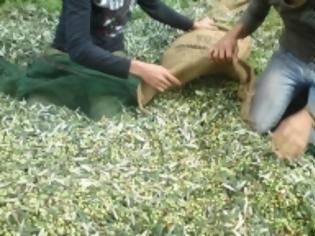 Φωτογραφία για Αιτωλοακαρνανία: Πέθανε ενώ μάζευε ελιές