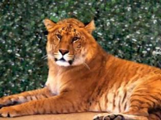 Φωτογραφία για Η βίλα «έκρυβε» ζωολογικό κήπο