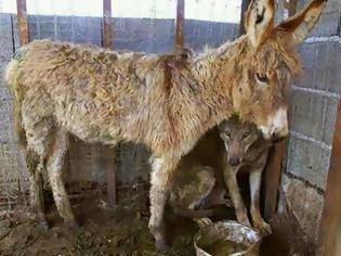 Φωτογραφία για Ο Λύκος και ο Γάιδαρος! Μια πολύ διδακτική ιστορία…