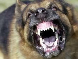 Φωτογραφία για Πήγε να χαϊδέψει σκύλο και της δάγκωσε το μισό χέρι μέχρι το κόκαλο!