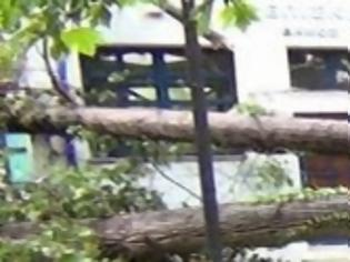 Φωτογραφία για Δράμα: Σοβαρές ζημιές προκλήθηκαν από ξαφνικό «μπουρίνι»! [video]