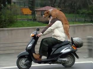 Φωτογραφία για FUNNY: Εκτελούνται μεταφορές σκύλων...(PICS)