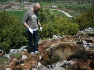 Φωτογραφία για Και αρκούδα νεκρή από φόλα!