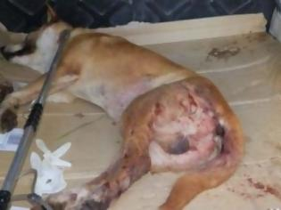 Φωτογραφία για Πυροβόλησαν σκυλί που έφαγε μια κότα
