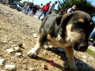 Φωτογραφία για Αχαΐα: Σκυλάκι παγιδεύτηκε σε αλεποπαγίδα - Το έσωσαν εθελοντές φιλόζωοι