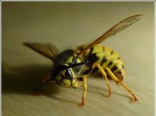 Φωτογραφία για Σμήνος μελισσών επιτέθηκε σε μέλη ινδικής παραστρατιωτικής οργάνωσης
