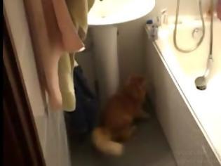 Φωτογραφία για Δείτε τη γάτα που την πιάνει πανικός όταν κλείνουν ένα πορτάκι! [Video]