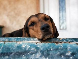 Φωτογραφία για Έκκληση για την σωτηρία των σκυλιών που αργοπεθαίνουν εγκαταλελειμμένα στην Σαλαμίνα