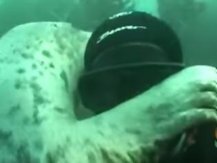 Φωτογραφία για Όταν ο δύτης συναντά μια φώκια [video]