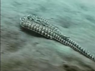 Φωτογραφία για ΑΠΙΣΤΕΥΤΟ: ΔΕΙΤΕ το χταπόδι που μεταμορφώνεται σε ψάρι για να επιβιώσει... [video]