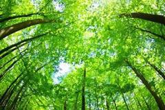 Τα δέντρα όλης της Γης υπολογίζονται σήμερα σε 3 τρισεκατομμύρια