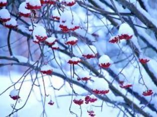 Φωτογραφία για Θα κάνουμε λευκά Χριστούγεννα; Τι λένε οι προβλέψεις για τον Δεκέμβριο
