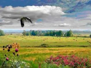 Φωτογραφία για Η παγκόσμια βιοποικιλότητα μειώθηκε κατά 30%