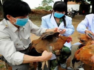 Φωτογραφία για Κίνα: Βρέθηκε αγρότισσα με γρίπη των πτηνών