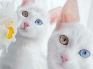 37603513e723 Φωτογραφία για Δείτε ΠΟΣΟ κοστίζουν οι 19 πιο ΑΚΡΙΒΕΣ Ράτσες Γάτας του  Κόσμου - Η Τιμή
