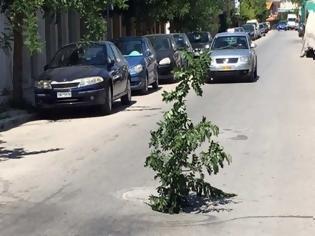 Φωτογραφία για Μόνο στην Ελλάδα: Τύπος στόλισε δέντρο που φύτρωσε στο κέντρο δρόμου της Θεσσαλονίκης!