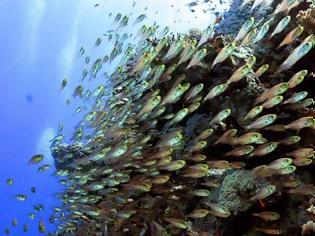 Φωτογραφία για Τα ψάρια εξαφανίζονται με πολύ ταχύτερο ρυθμό από ό,τι πιστεύαμε