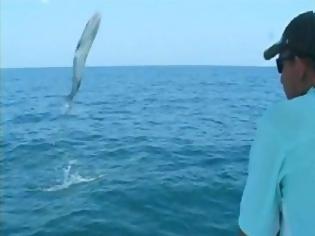 Φωτογραφία για Τεράστιο μπαρακούντα πήδηξε μέσα σε βάρκα! [Video]