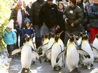 Φωτογραφία για «Να περπατάτε σαν… πιγκουίνοι για να μην γλιστράτε στον πάγο»
