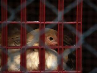 Φωτογραφία για Εξαπλώθηκε η γρίπη των πτηνών στη Βουλγαρία