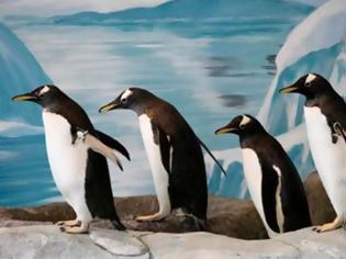 Φωτογραφία για Για να μην γλιστράτε στον πάγο, περπατήστε όπως οι πιγκουίνοι!
