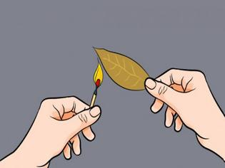Φωτογραφία για Δείτε τι θα συμβεί αν Κάψετε ένα φύλλο Δάφνης μέσα στο σπίτι και Περιμένετε για λίγα λεπτά… f