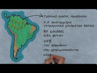 Φωτογραφία για Βίντεο: Αμαζόνιος – Ένα από τα «μεγαλύτερα φαρμακεία στον κόσμο»