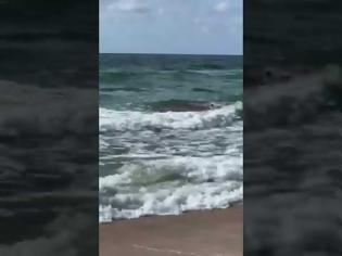 Φωτογραφία για Συγκλονιστικό βίντεο: Καρχαρίας αρπάζει και σκοτώνει δελφίνι (vid)