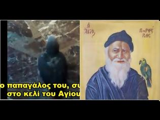 Φωτογραφία για Ο παπαγάλος του Γέροντος Πορφυρίου, λέει ακόμα την προσευχή μιμούμενος την φωνή του Αγίου