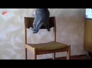 Φωτογραφία για Γάτα επιτίθεται σε... καρέκλα VID