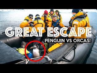 Φωτογραφία για Η μεγάλη απόδραση του πιγκουίνου στην Ανταρκτική