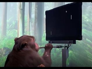 Φωτογραφία για Η εταιρεία Neuralink του Ι. Μασκ παρουσίασε μαϊμού με ασύρματα εγκεφαλικά τσιπάκια να ...παίζει βιντεοπαιγνίδι μέσω του νου της!